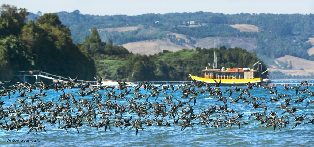 Bahía Pullao. Chiloé. Antonio Larrea