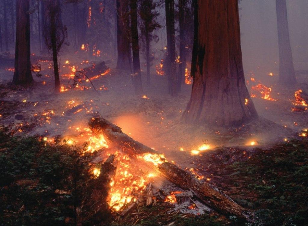 Resultados-incendio-forestal-Chile